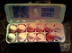 Winning Prize - 12 fresh farm eggs